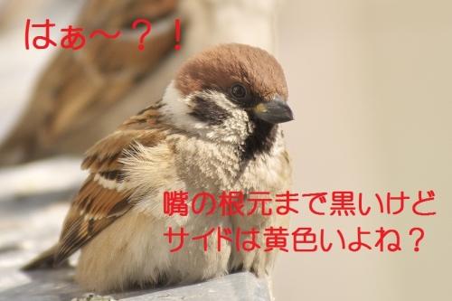 100_20140228133343352.jpg