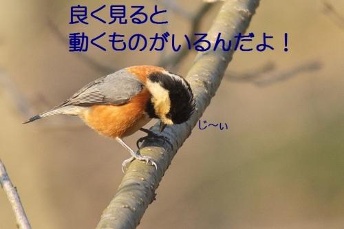 100_2014031818545363f.jpg
