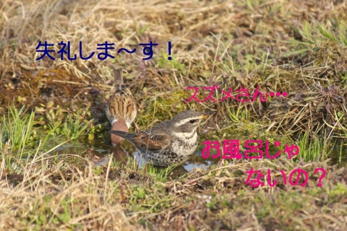 100_201403242124594ed.jpg