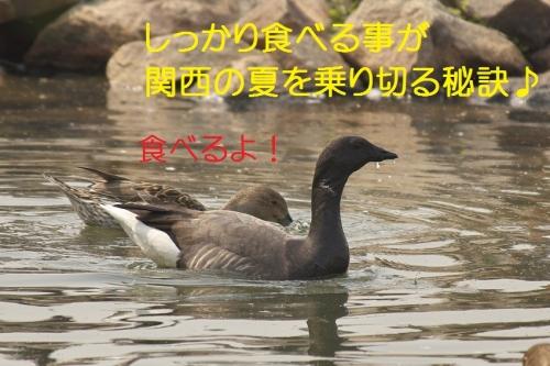 100_201404302149220e9.jpg