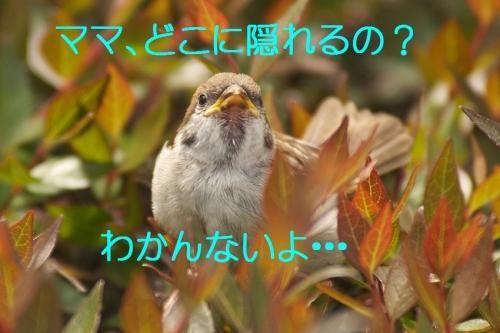 100_20140506203855895.jpg