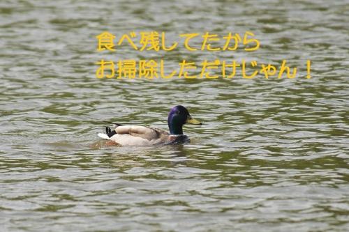 100_201405090137564df.jpg
