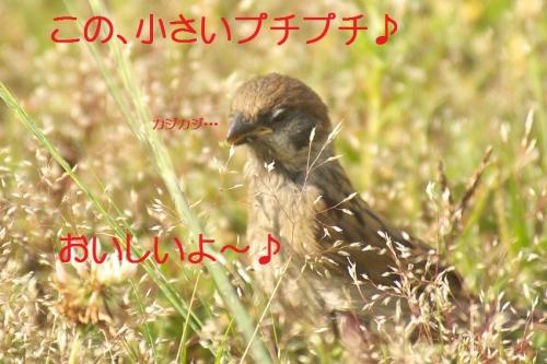 100_201405302131052c6.jpg