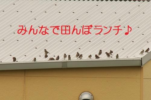 100_20140831211301df7.jpg