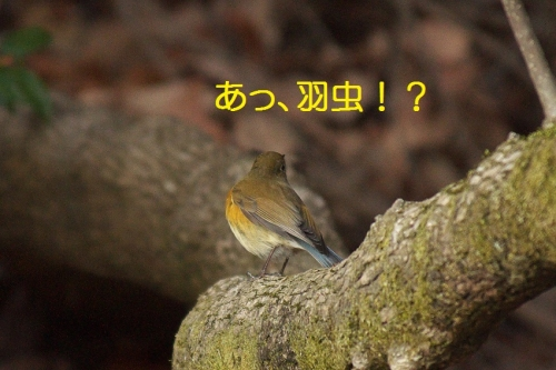 110_2014032016510531f.jpg