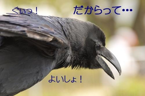 110_20140503212428b6d.jpg
