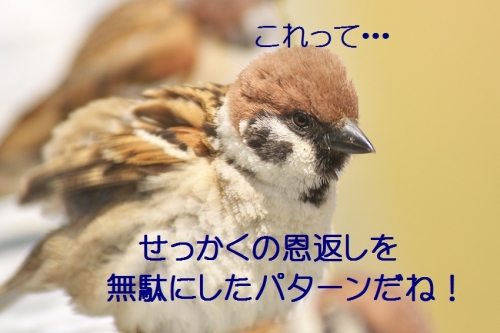110_20140507221326df0.jpg