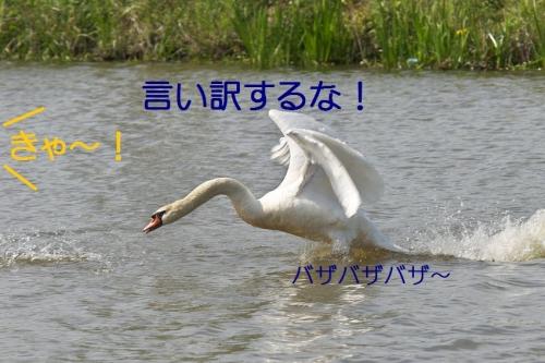 110_2014050901383172d.jpg