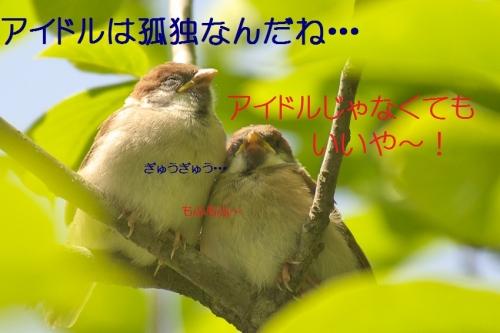 110_20140519215201502.jpg