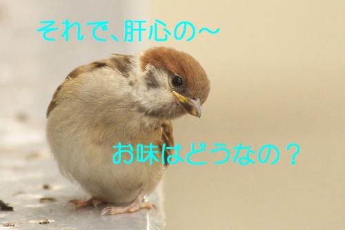 110_2014052621393832b.jpg