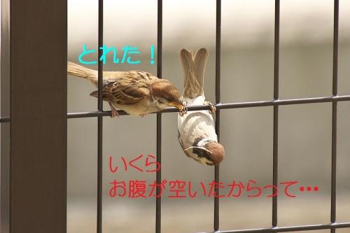 110_20140528220319c64.jpg