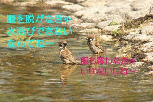 110_20140630212721597.jpg