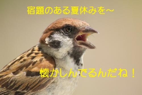 110_2014082722074758c.jpg