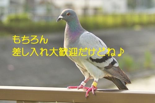 110_2014082920431086d.jpg