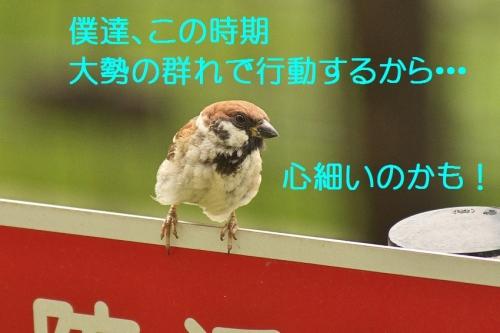 110_201408312113580a7.jpg