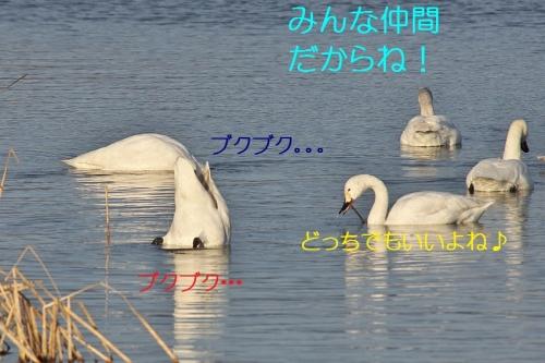 120_201402281338552a1.jpg