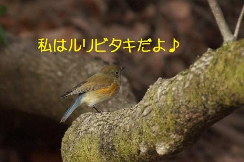 120_201403201651082f2.jpg