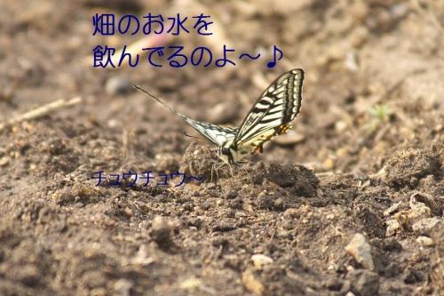 120_201404302150005e0.jpg