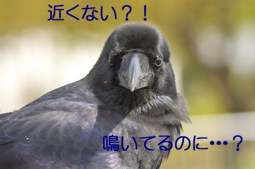 120_20140503212430d2b.jpg