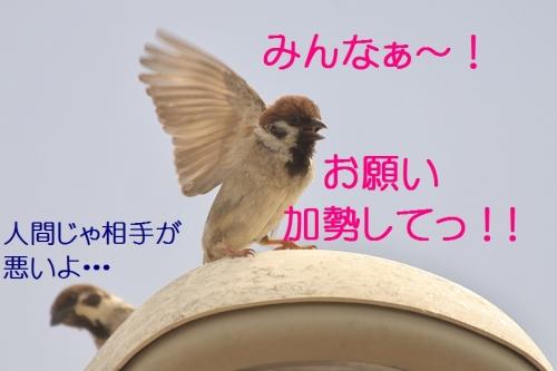 120_201405062038594fb.jpg
