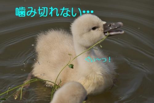 120_2014050818285276d.jpg