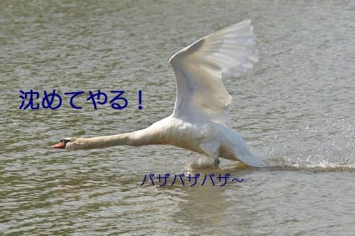 120_201405090138361d4.jpg