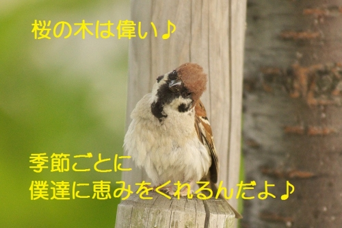 120_2014051011533998e.jpg