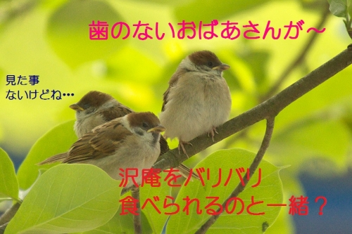 120_2014051518191956c.jpg