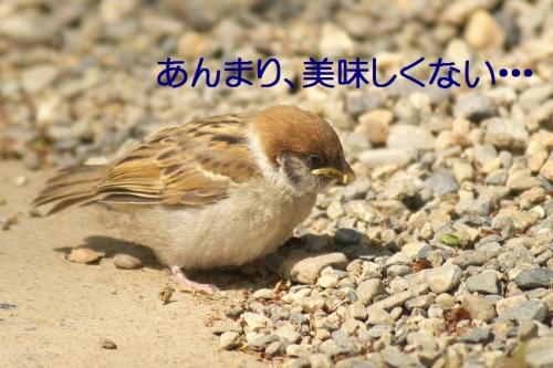 120_2014052018462479d.jpg