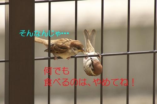120_2014052822032124c.jpg