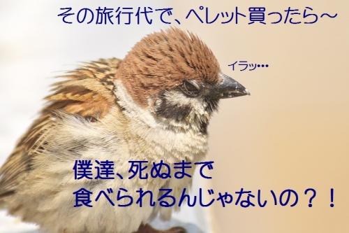 120_201405292156457c3.jpg