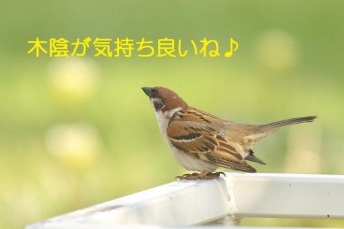 120_2014053021314475a.jpg