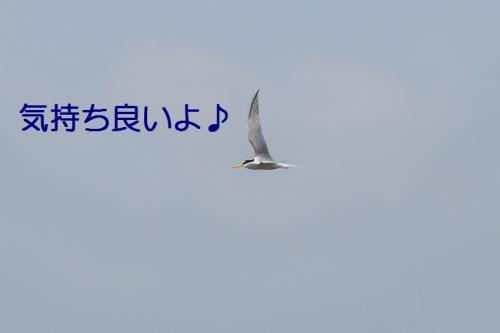 120_201406241805284c8.jpg