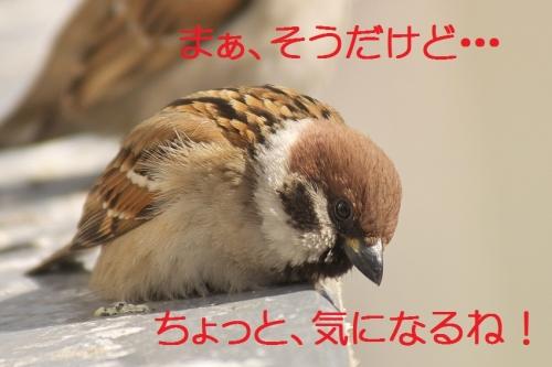 130_20140228133855187.jpg
