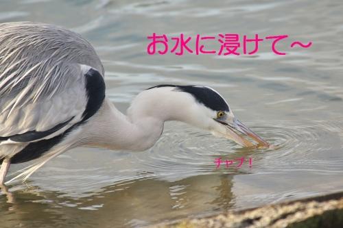 130_2014030520594718e.jpg