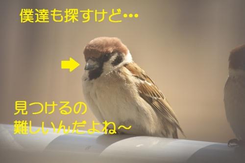 130_20140319214926313.jpg