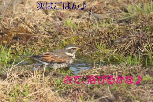 130_20140324212851f87.jpg