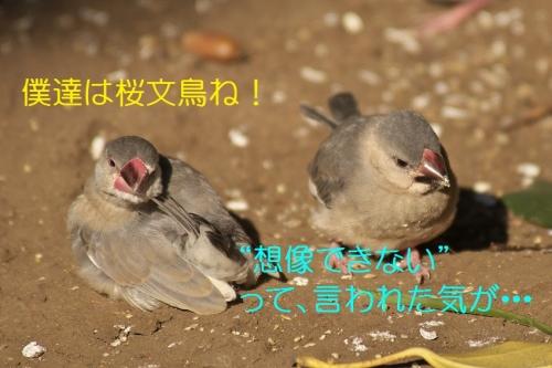130_20140505194349f41.jpg
