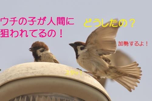 130_20140506204008432.jpg