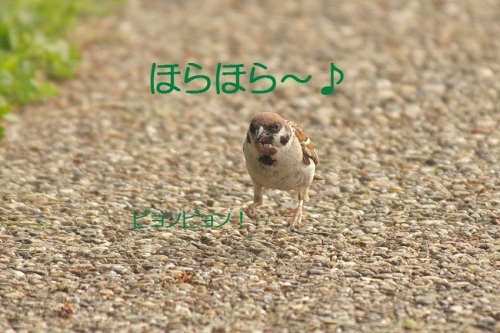 130_201405111941495fa.jpg