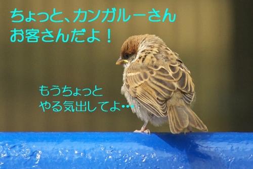130_20140514210857d37.jpg