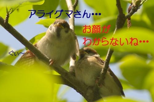 130_20140518181318de5.jpg