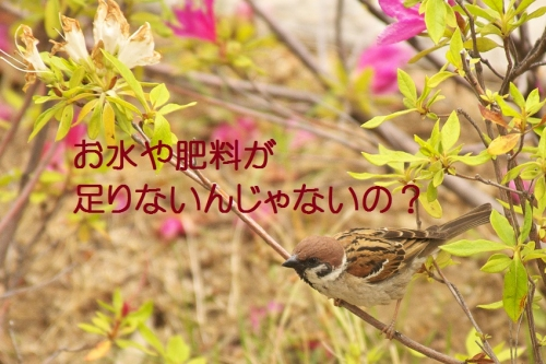 130_20140523213632ca3.jpg