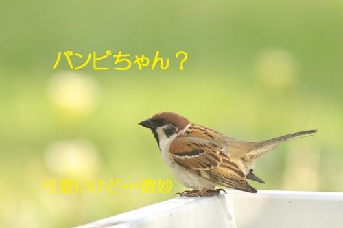 130_20140530213145dd5.jpg