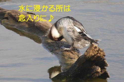 140_20140302184300bf8.jpg