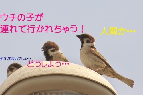 140_20140506204010ce7.jpg