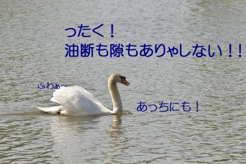 140_20140509013841c28.jpg
