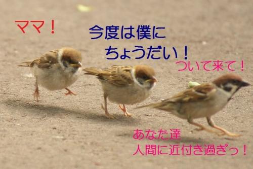 140_20140520184630956.jpg