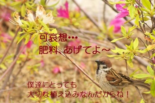 140_2014052321363409f.jpg