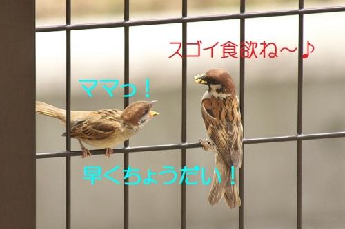140_201405271942567c3.jpg